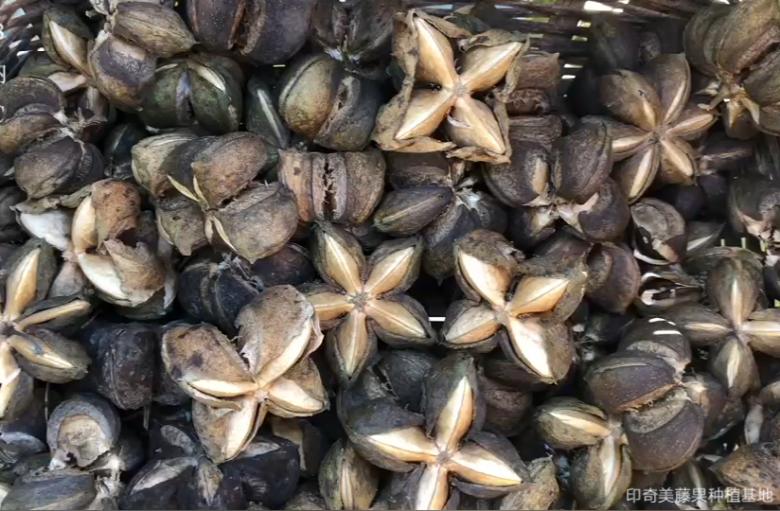 为什么要吃富含omega3-6-9的美藤果油